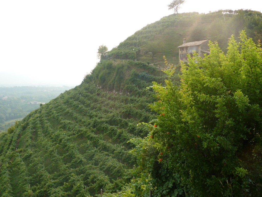 cartizze vineyards prosecco bike tours italy