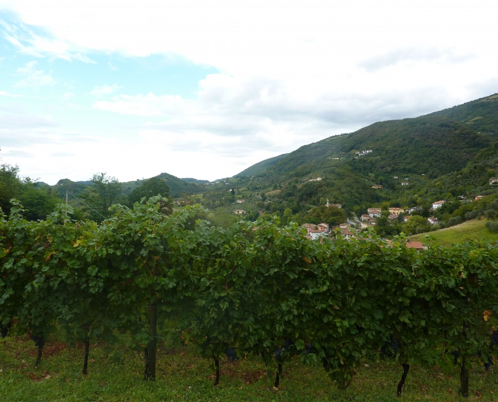 vineyards of contra soarda italy bike tours italiaoutdoors food and wine