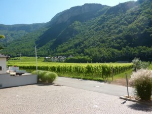 View of Terlano Vineyards