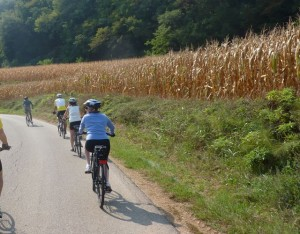 Corn fields along bike route - Italiaoutdoors italy bike tours