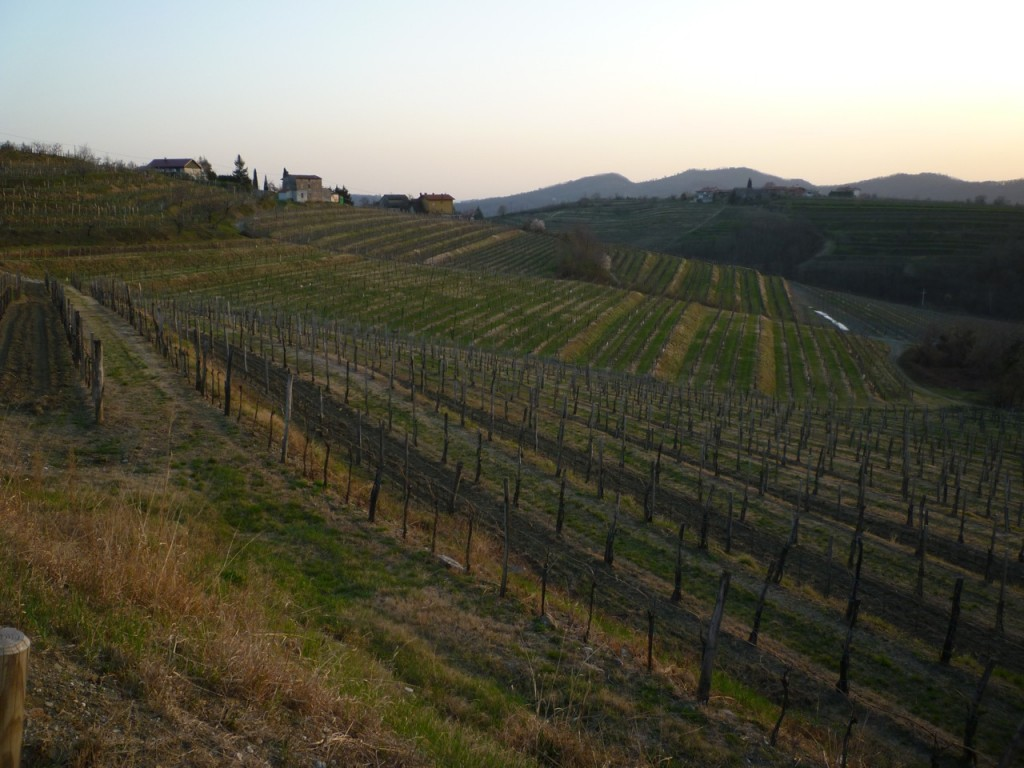 Keber vineyards - italiaoutdoorsfoodandwine italy bike tours