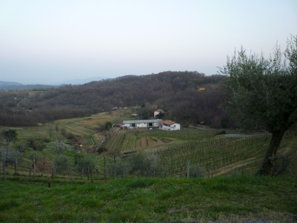 Vineyards outside of Cormons - Italiaoutdoorsfoodandwine cycling holidays italy