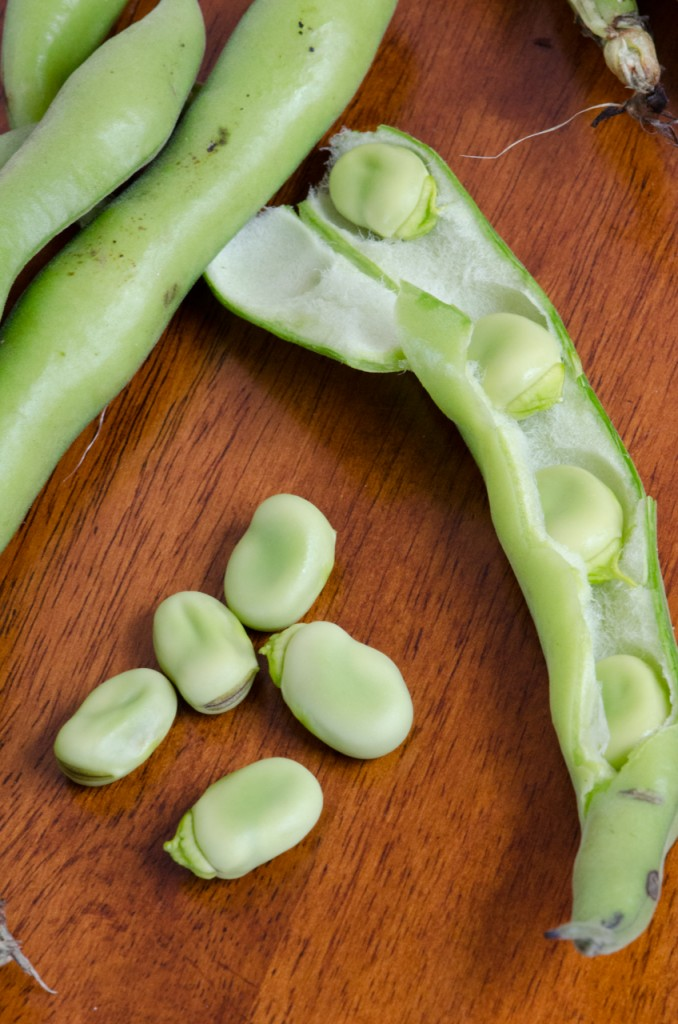 peeling fava beans culinary bike tours italy italiaoutdoors food and wine