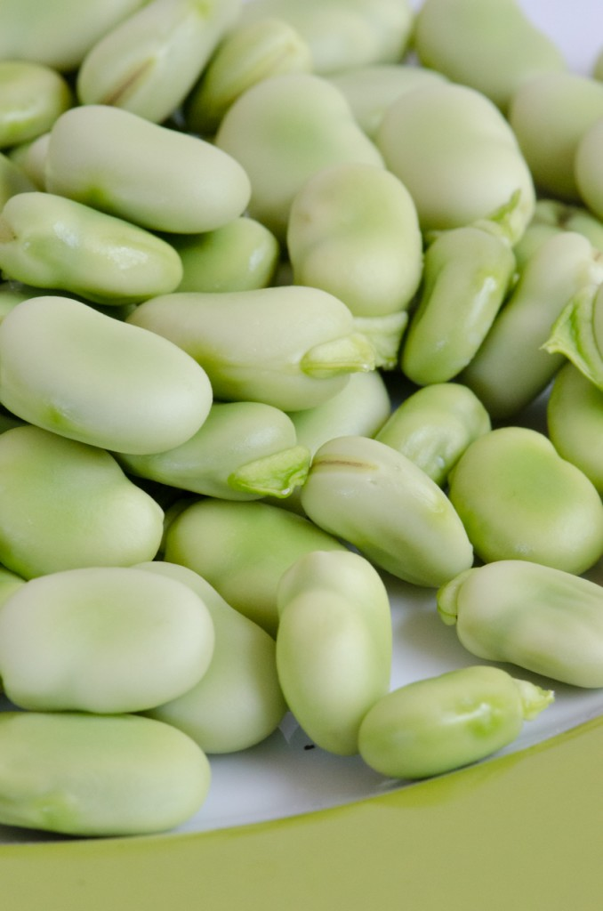 unpeeled fava beans wine cycling holidays italy italiaoutdoors food and wine