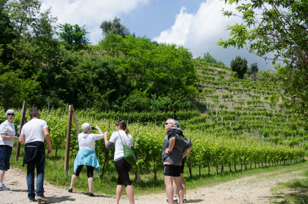 group at prettiest vineyard bicycle tours italy italiaoutdoors food and wine