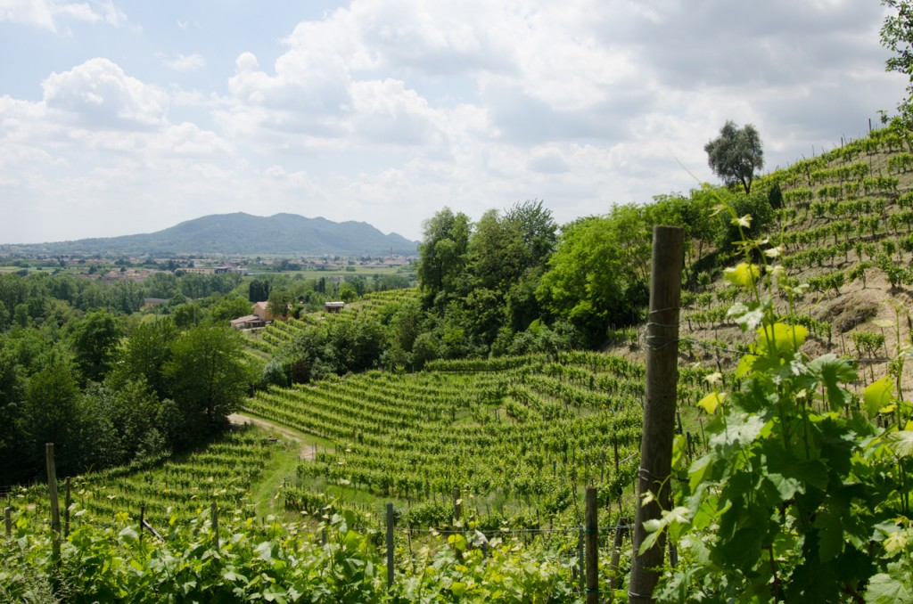prettiest vineyard bike tours italy italiaoutdoors food and wine