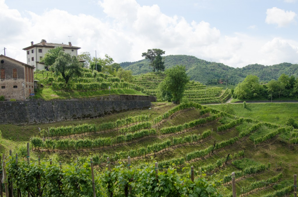 prosecco hills bike tours italy italiaoutdoors food and wine