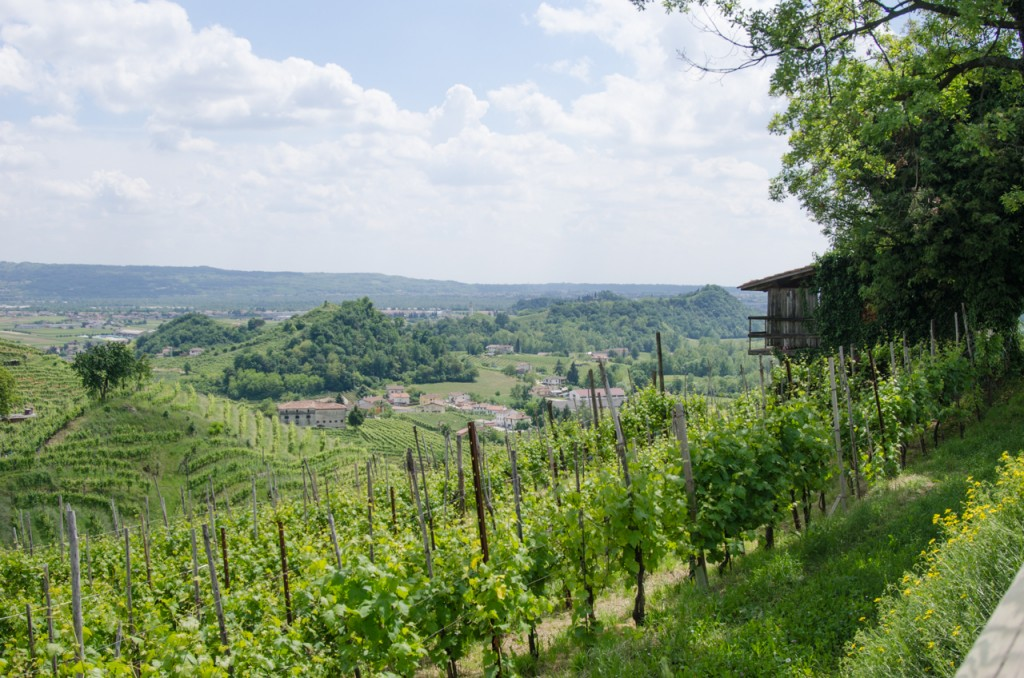 view from vineyards bicycle holidays italy italiaoutdoors food and wine