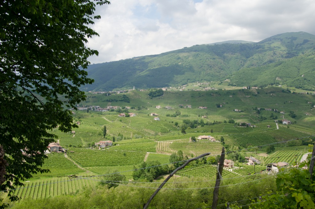view from vineyards bike holidays italy italiaoutdoors food and wine