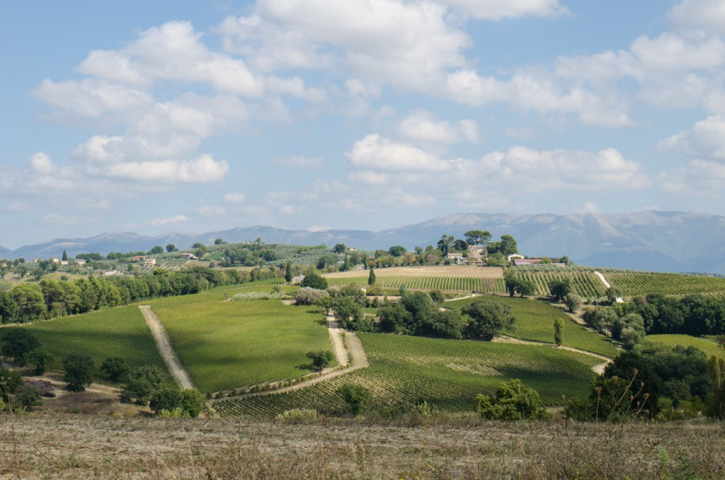 montefalco vineyards bike tours italiaoutdoors food and wine