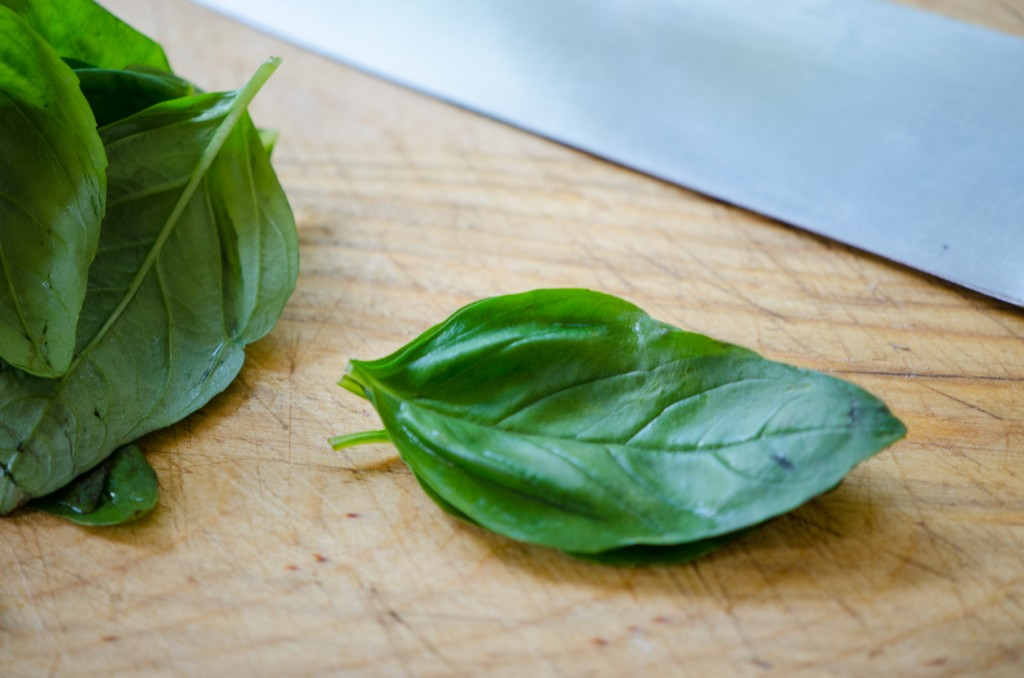 flat basil leaves ski tours italy