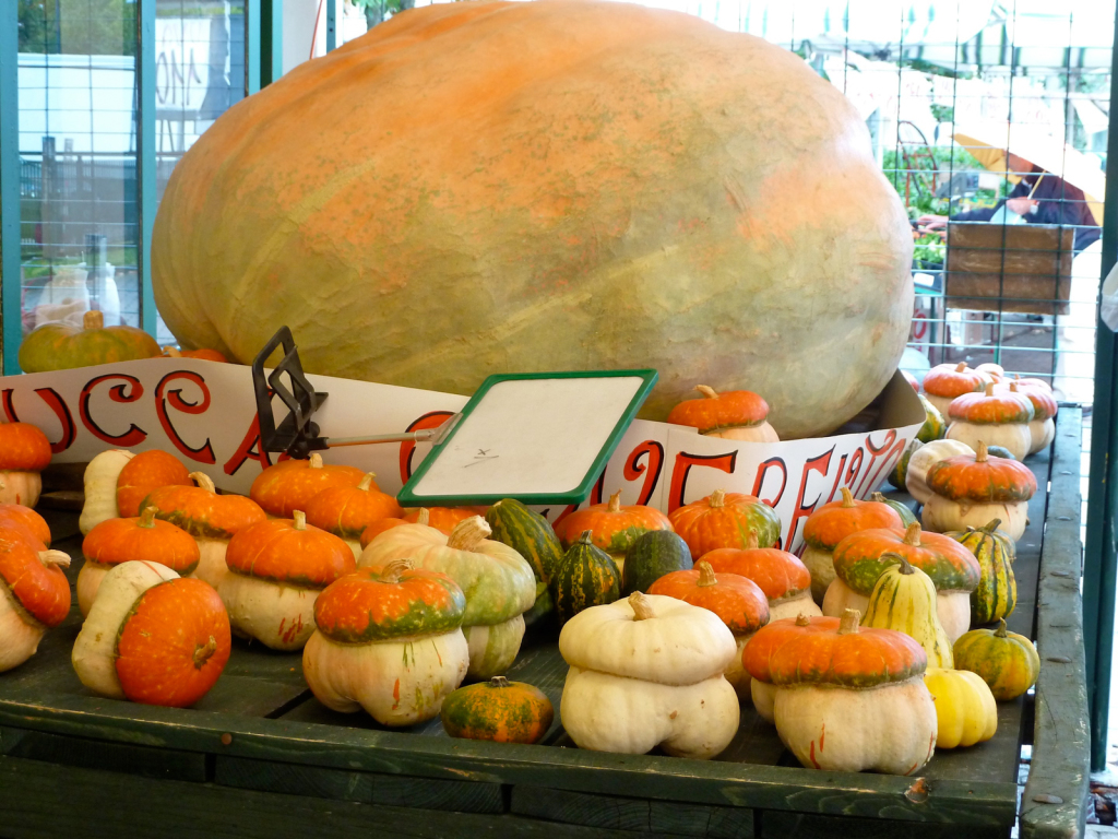 pumpkins at market italy private bike tours