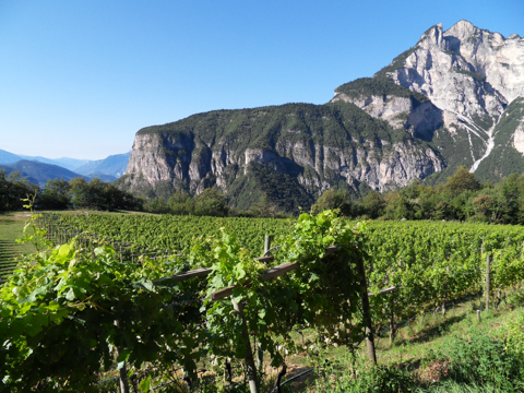 tiefenbrunner vineyards walking tours italy