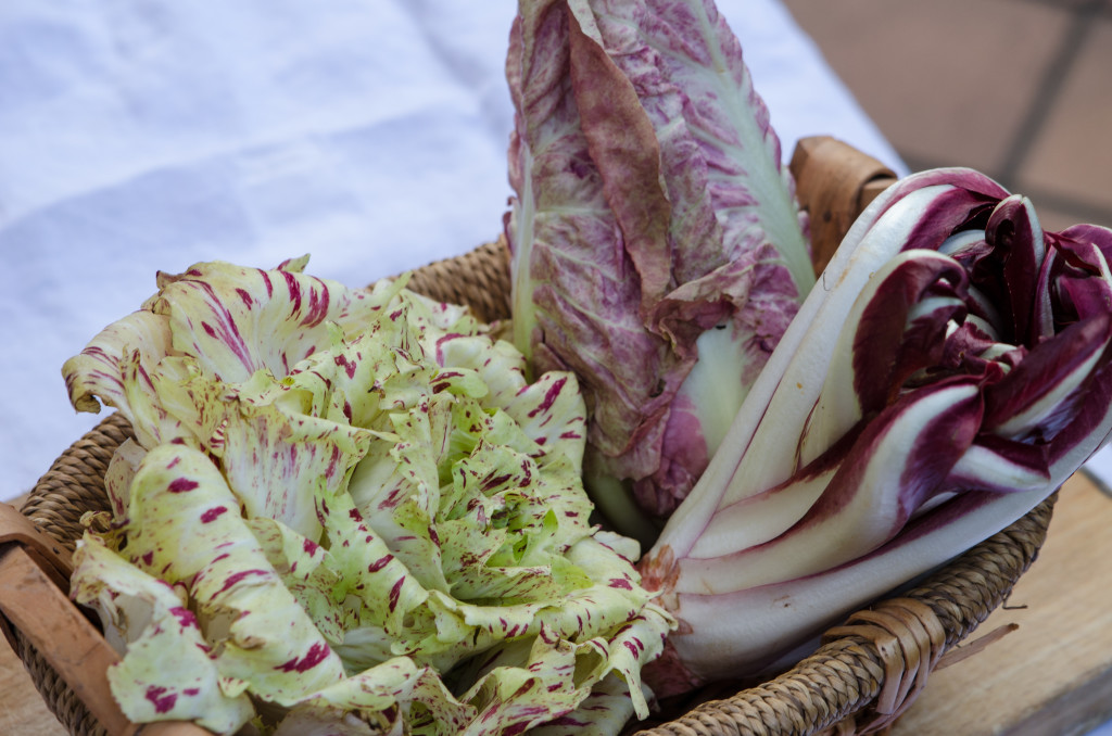 radicchio-varities-private-walking-tours-italy-italiaoutdoors