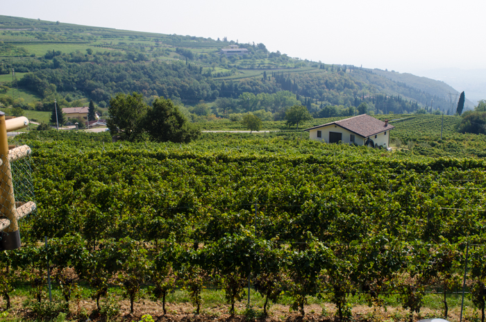 accordini-vineyards-private-italy-walking-tours