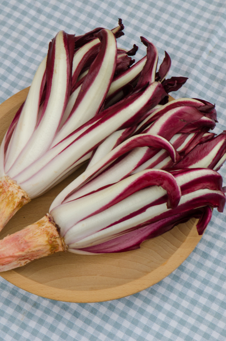radicchio-tardivo-italy-walking-tours