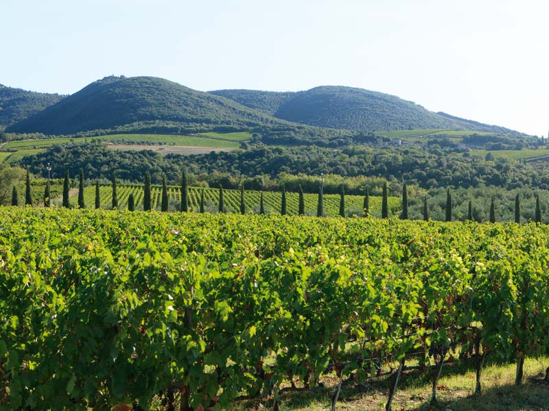 chianti_panorama-private-bike-tour-tuscany