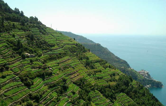 vineyards-liguria-walking-tours-italy