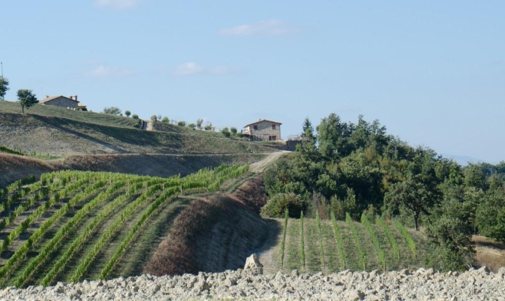 umbria vineyards bike tours italiaoutdoors food and wine