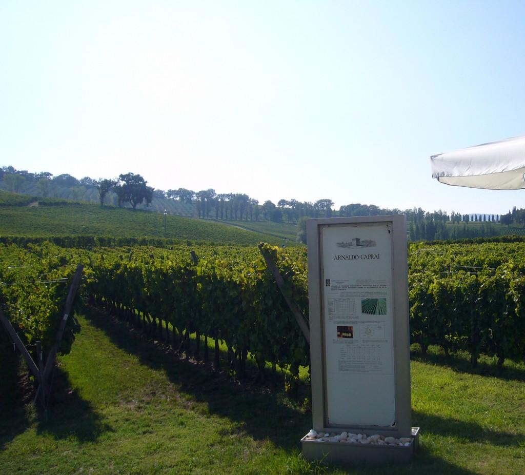 vineyards at caprai bike wine tours italy italiaoutdoors food and wine.com