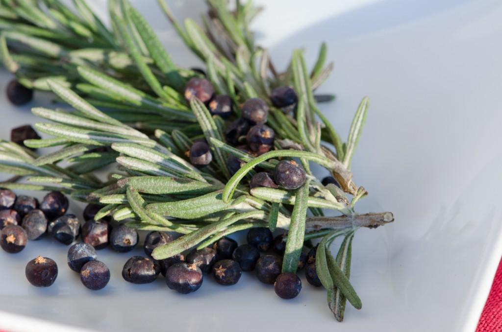 rosemary juniper berries tuscany bike tours italiaoutdoors food and wine