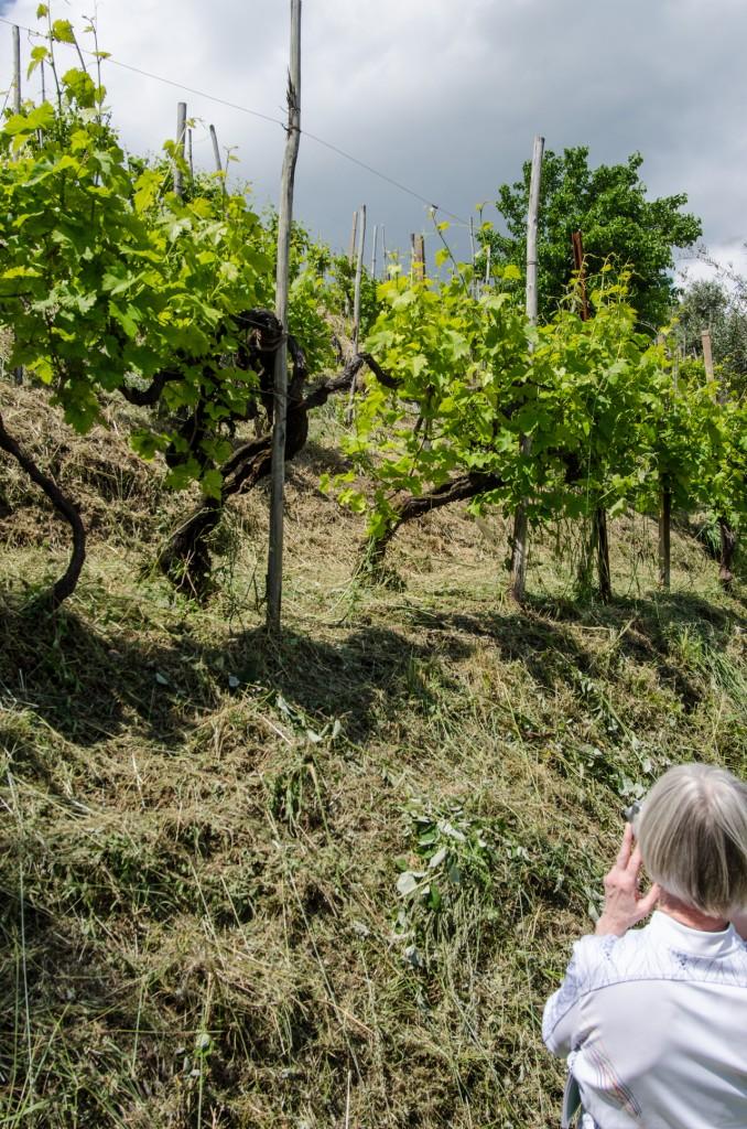 oldest vine bike wine tours italiaoutdoors food and wine