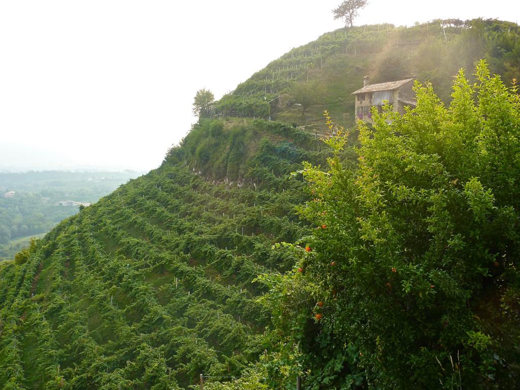 col vetoraz vineyards cartizze bike tours italy