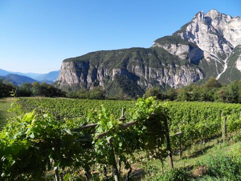tiefenbrunner vineyards walking tours italy
