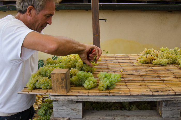 drying-grapes-montapulciano-custom-bike-tours-italy
