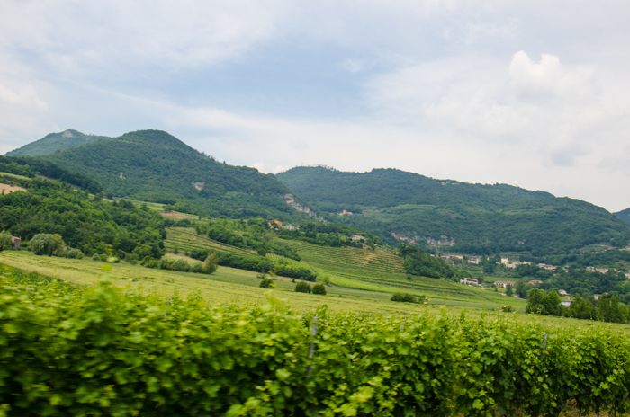 colli-berici-private-walking-tour-italy
