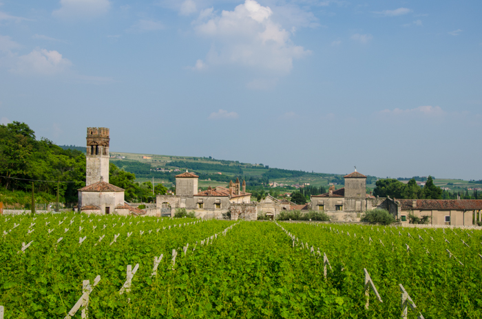 valpolicella-vineyards-private-walking-tours-italy