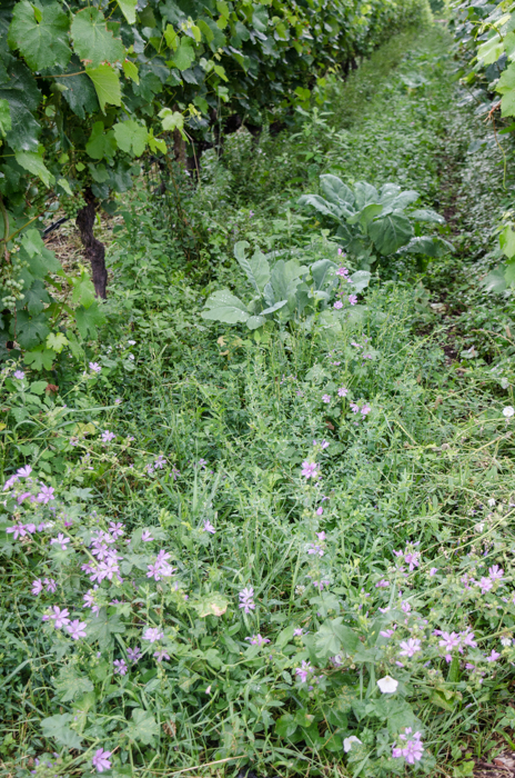 cover-crop-low-private-bike-tours-italy