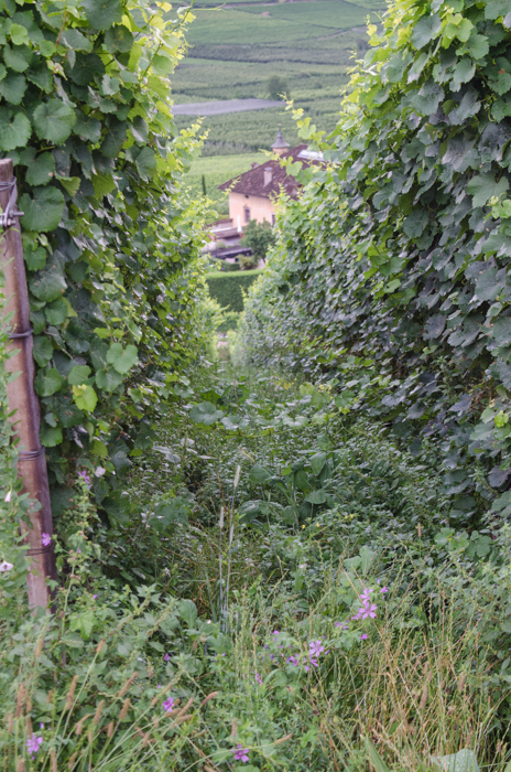 cover-crop-private-bike-tours-italy
