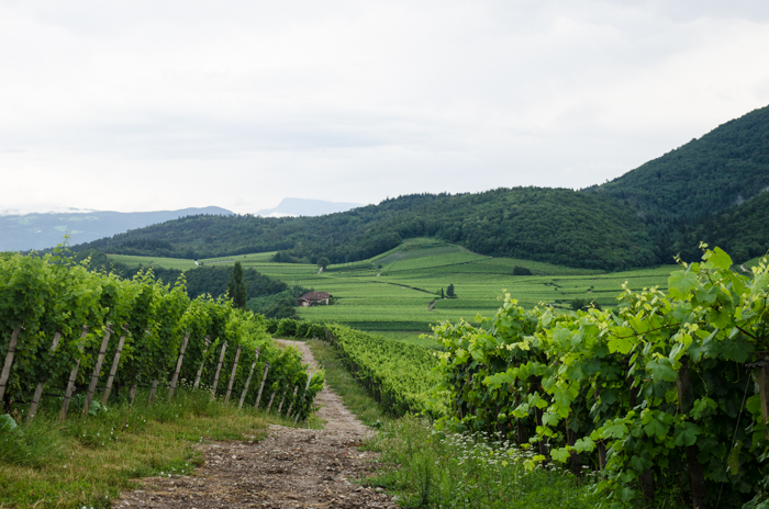 vineyards-private-bike-tours-italy