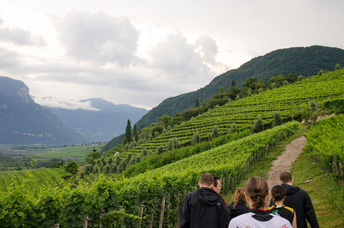 wine-tour-tramin-walking-tour-italy