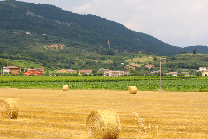 fields-vicenza-italy-walking-tours