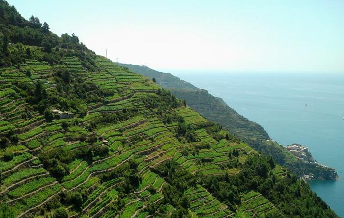 Wines of Liguria - Exploring Italy with Italiaoutdoors | Italian
